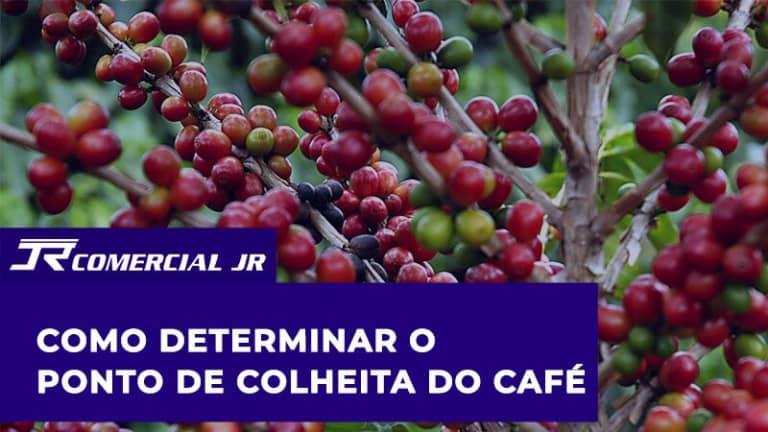 Como Determinar o Ponto de Colheita do Café
