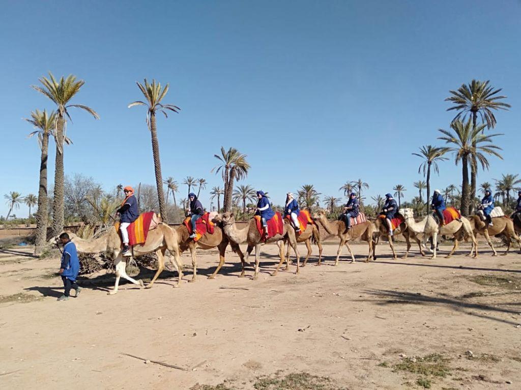 camel trekking palmerai marrakech