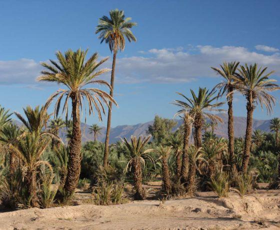 Marrakech desert tour  7 days: Image 9
