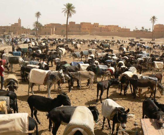 Marrakech desert tour 7 days from fes: Image 5