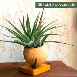 tillandsia's creation (1 plant) - Création originale composée de matières végétales et d'un tillandsia