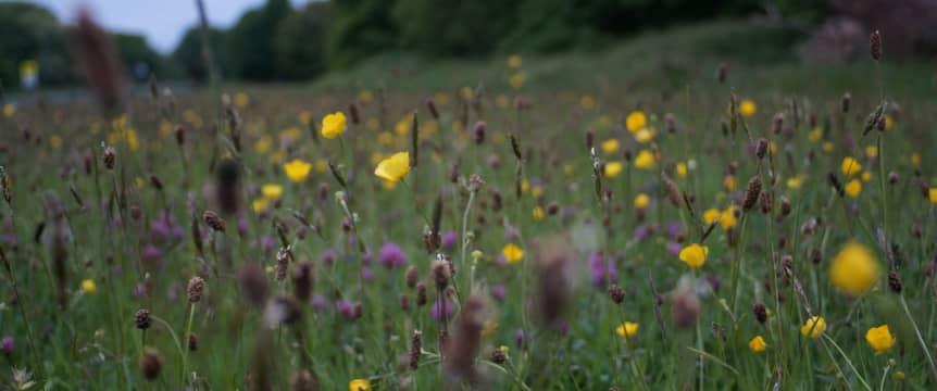alt-Wildflowers