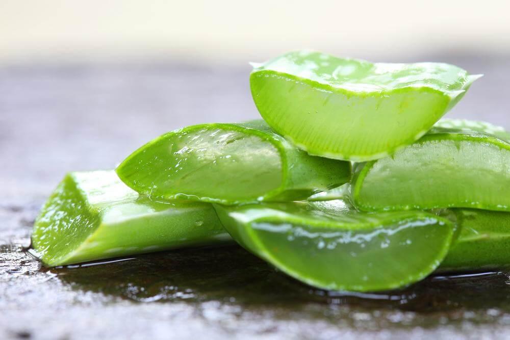Benefícios da Aloe Vera (Babosa) Para Uma Saúde Melhor