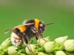 Win 1 of 2 bumblebee hives by Zonda Beneficials