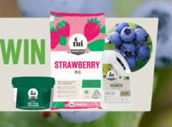 Win a blueberry planting Pack