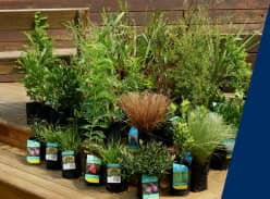 Win one established native plant pack worth $650