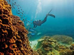 Win a Luxury Trip for 2 to The Great Barrier Reef