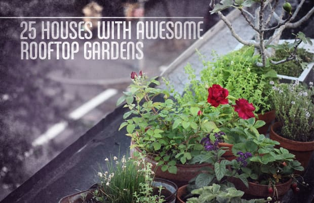25 Houses With Awesome Rooftop Gardens | Complex
