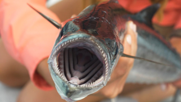 Nissan Takes Us On a Florida Fishing Adventure