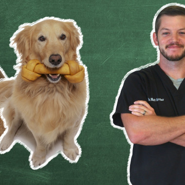 Pet 101: Are Bones Safe for Your Dog?