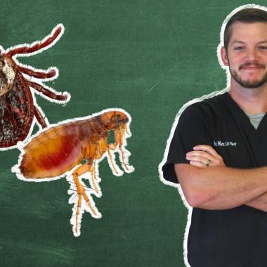 Pet 101: What Flea and Tick Medicine Is Best?