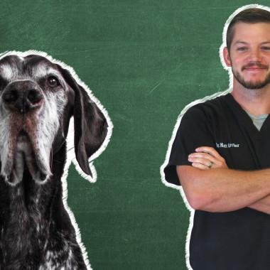 Pet 101: Senior Pets
