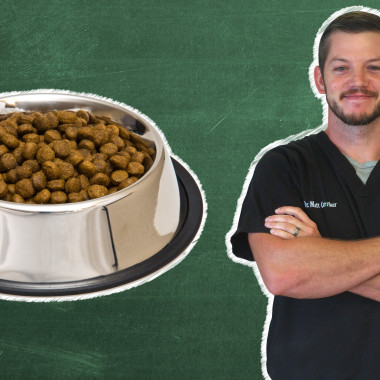 Pet 101: Is It Better To Use Kibble Or Raw Food?