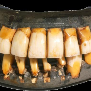 Strange Heartland History: How George Washington's Teeth Helped Win the Revolution