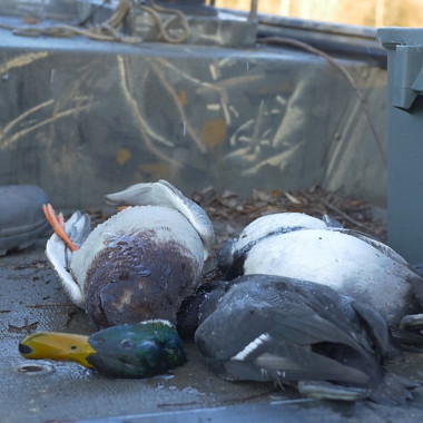 The Hunt Episode 2: Opening Day of Duck Season