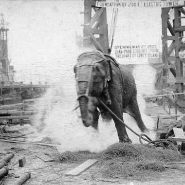 Strange Heartland History: Did Thomas Edison Really Fry an Elephant with Electricity?