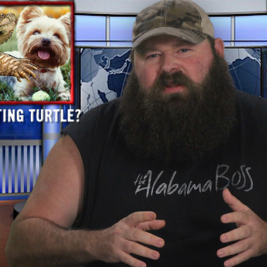 Snapping Turtle Eats Puppy, Drunk Bride Crashes Own Wedding and More | This Week in Un-Current Events