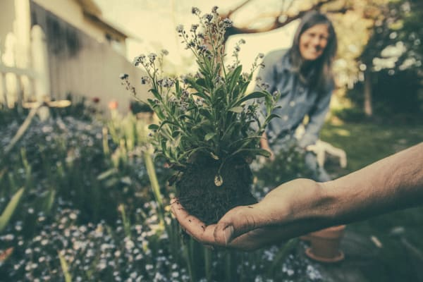 5 Tipps für die Gartenpflege