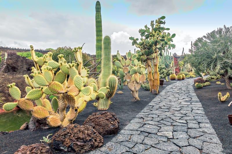 Lanzarote – Jardín de Cactus
