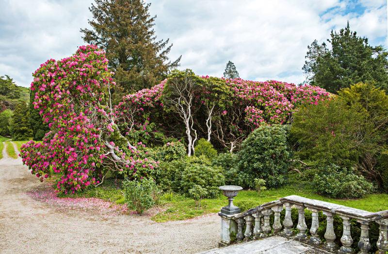 Grand Hibernian Garten