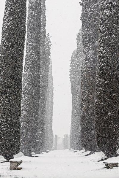 Am Ende der Zypressenallee stehen sich zwei Eibenstelen gegenüber, als        hielten sie geheime Zwiesprache.