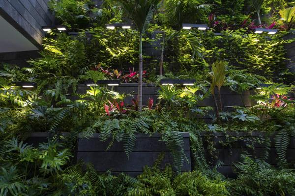 Pflanzen benötigen Licht, damit in den Blättern die Photosynthese ablaufen kann. Bei zu niedriger Lichtintensität werden nicht genügend Nährstoffe gebildet – und Ihr grüner Mitbewohner verhungert. Es ist daher gerade in der dunklen Jahreszeit sehr wichtig, daß es am Standort jeder Pflanze hell ist. Wenn das natürliche Licht nicht reicht, kann man die zu niedrige Beleuchtungsstärke recht einfach mit künstlichen Mitteln erhöhen.