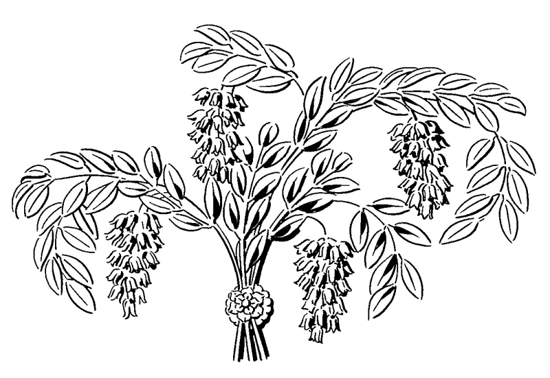 Florentiner B