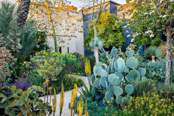 """""""Exotic garden"""" hat Tom Stuart-Smith den kleinen Garten genannt, in dem ein Orchideenbaum (rechts) neben Feigenkakteen, Honigbüschen, Palmlilien und Elefantenohr-Kalanchoen (links) blüht. Von hier gelangt man durch ein Tor in den islamischen Garten mit Wasserspielen, Pavillons, Zitrus- und Olivenbäumen."""