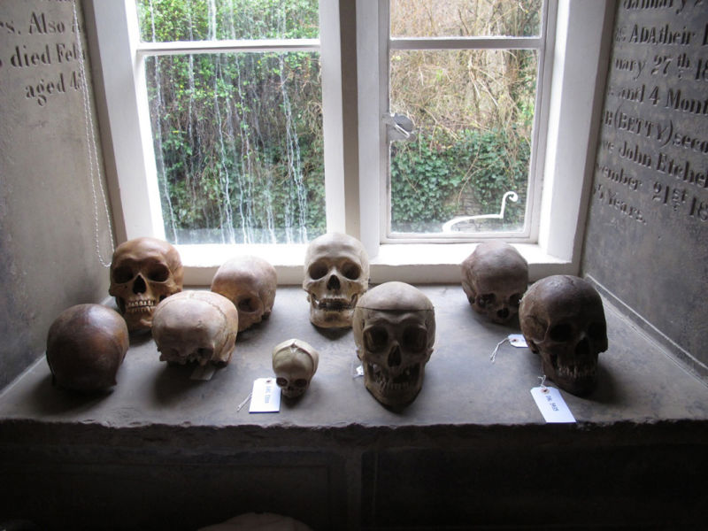 Skulls on display in Damien Hirst's house.