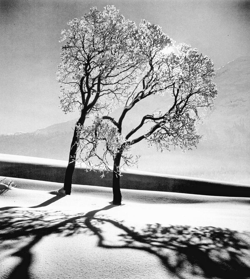 Alfred Eisenstaedt, Trees in Snow, St. Moritz, 1947