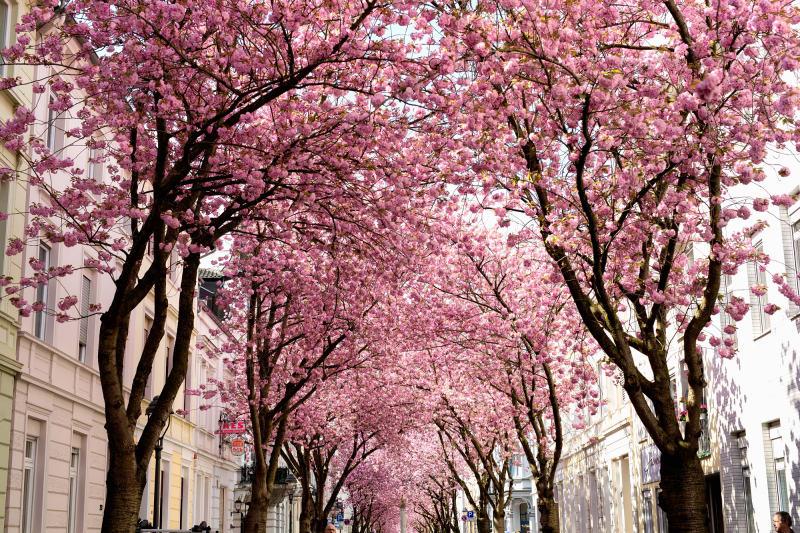 13. Bonn, Deutschland