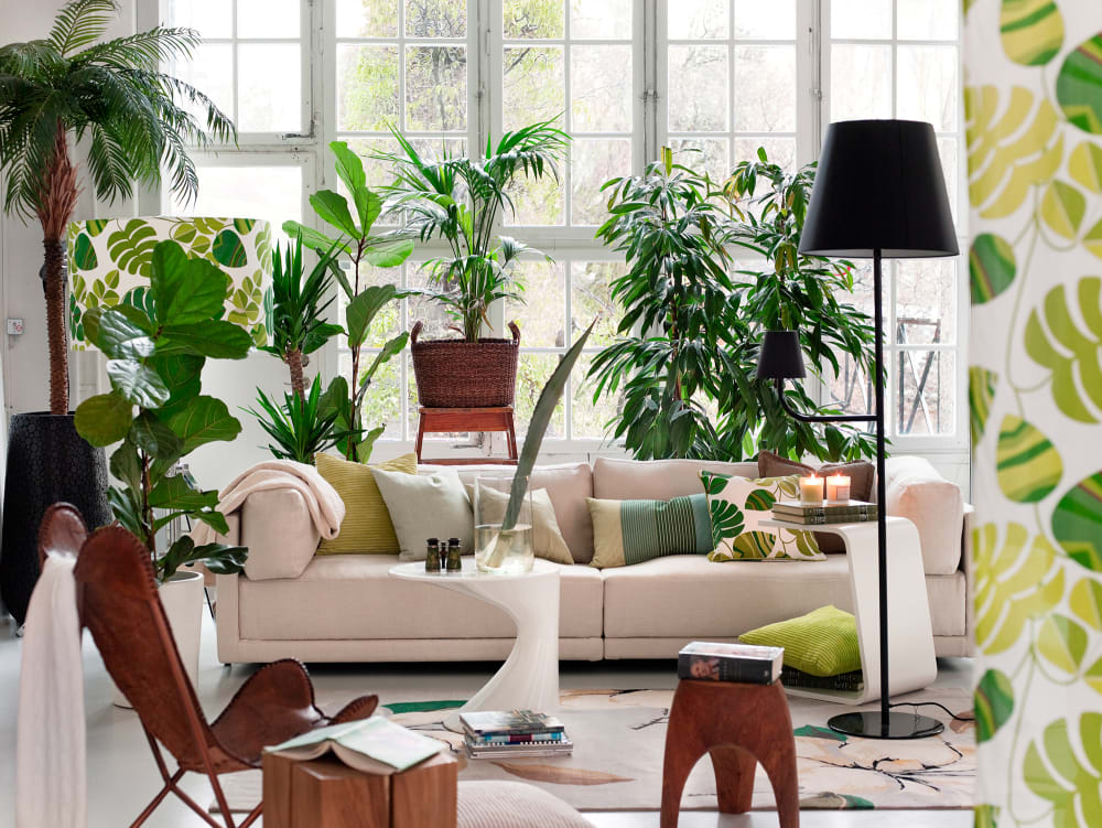 Welcome to the Jungle: So pflegen Sie Pflanzen und Bäume im Innenraum