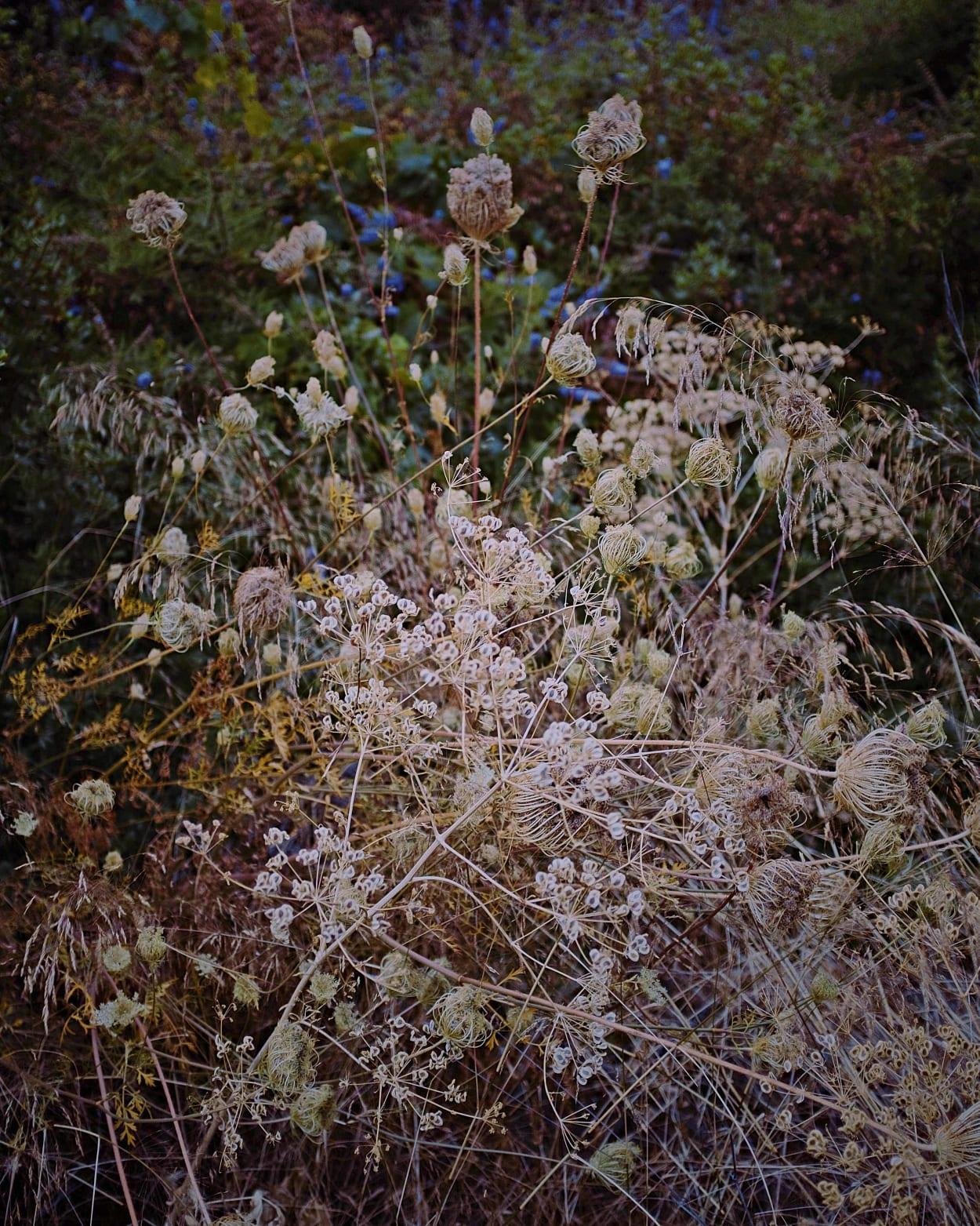 Garten, Fotografie, Letizia Le Fur, Pflanzen, Farbe, Botanik, Paris