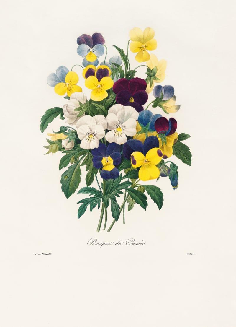 """""""Pierre-Joseph Redouté – Das Buch der Blumen"""""""