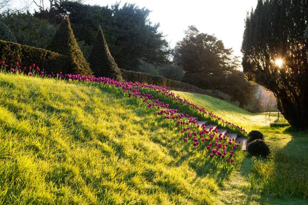 """An der Steintreppe im Landschaftsgarten komplimentiert """"Purple Prince"""" die Spaziergänger hinauf – oder hinunter."""