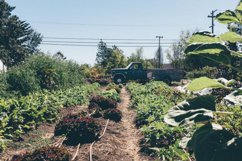 Farmers Black Market Sonoma County 7