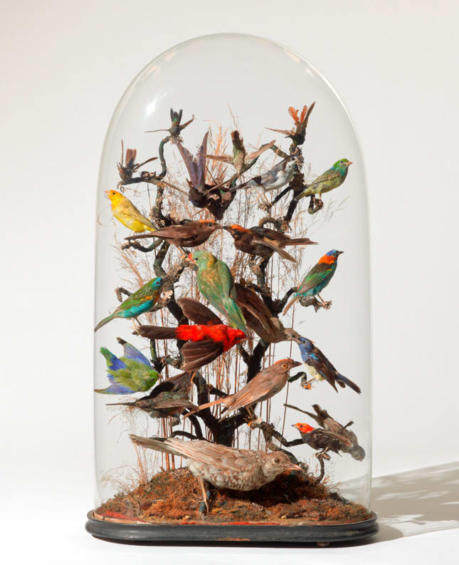Unknown maker, Montage display of 24 tropical birds, mid-19th century.