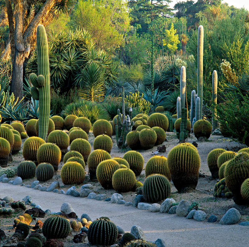 Kalifornien – Huntington Desert Garden