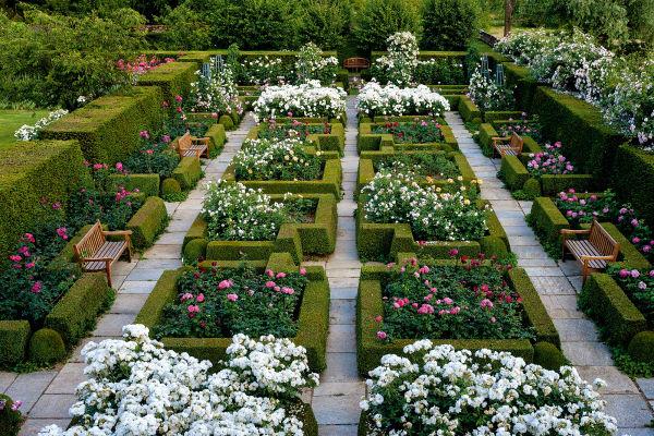 Struktur muss sein! Und doch sprengen die Rosen auf Tenuta Banna im        Piemont den strengen Buchsrahmen mit ihrer Lebenslust!