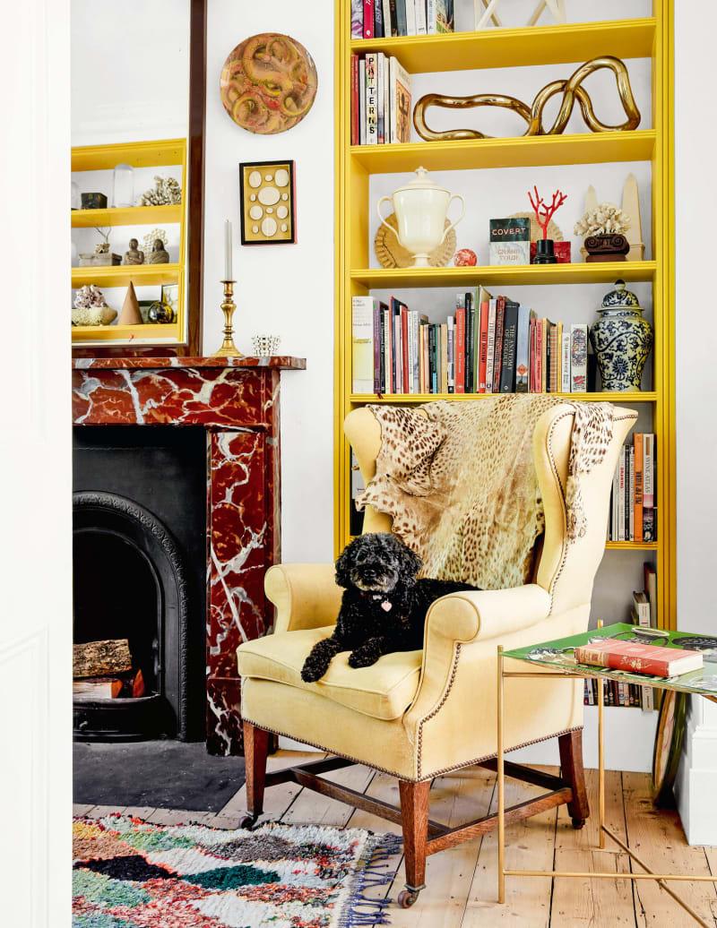 Bridie Halls Zwergpudel Max auf einem antiken Sessel