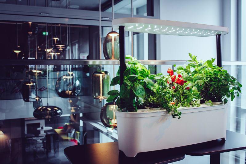 Indoor-Garten Urgrow