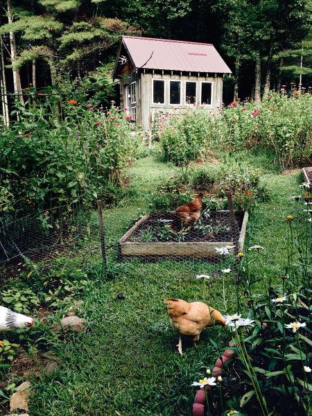 In Blue Ridge, Georgia bevölkert neben den Wochenendgärtnern auch eine Hühnerschar den Kleingarten.