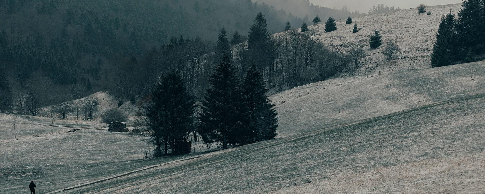 Schwarzwald, Garten, Fotografie