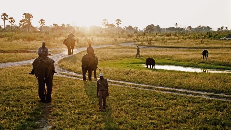 2. Abu Camp, Botswana