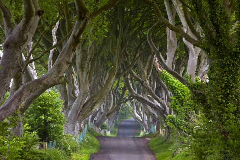 15. Ballymoney, Nordirland