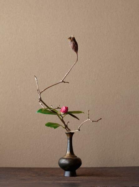 """Strauchkamelie: """"Ein fruchtiges, schweres Herz in der Mitte, unter einem ausgetrockneten, aber hoffnungsvollen Rouba-Zweig."""""""