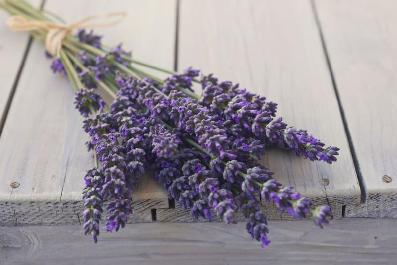 Lavendel wirkt gegen Insekten