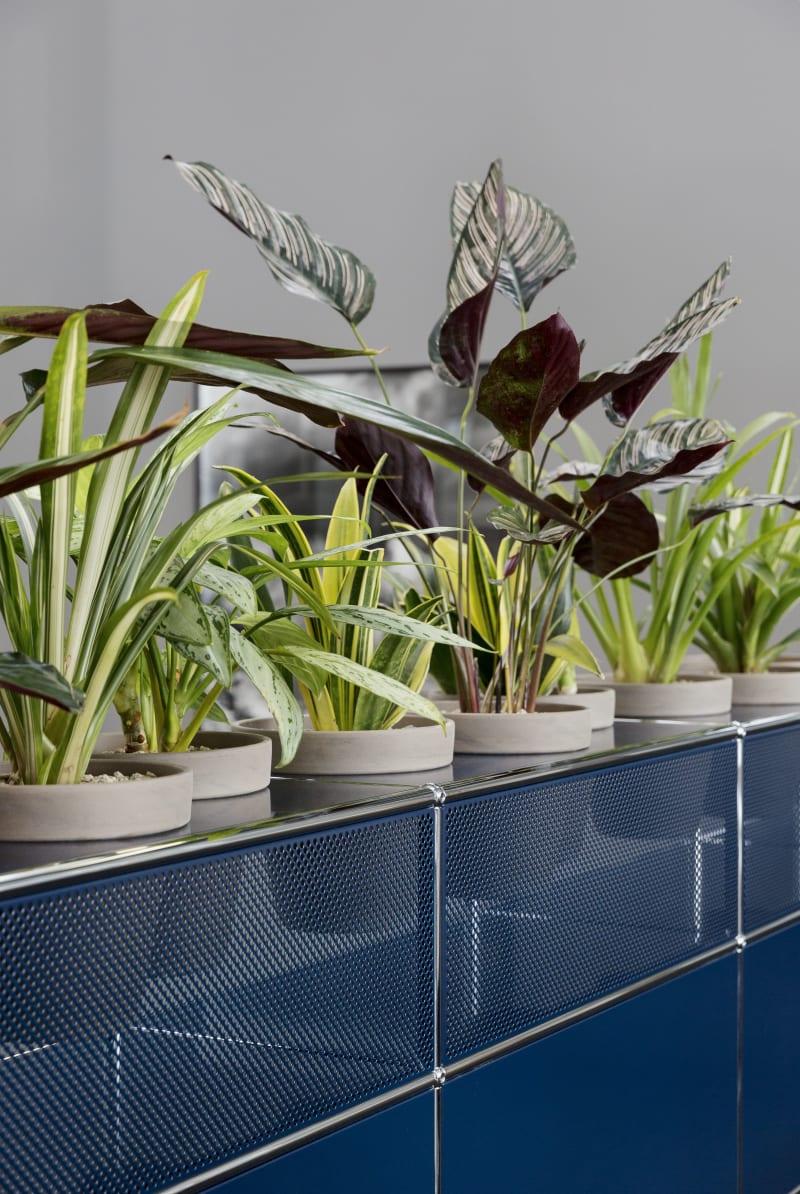 USM Haller Pflanzen