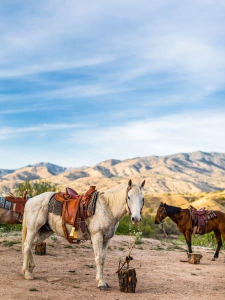 Schnell, die Pferde warten schon!