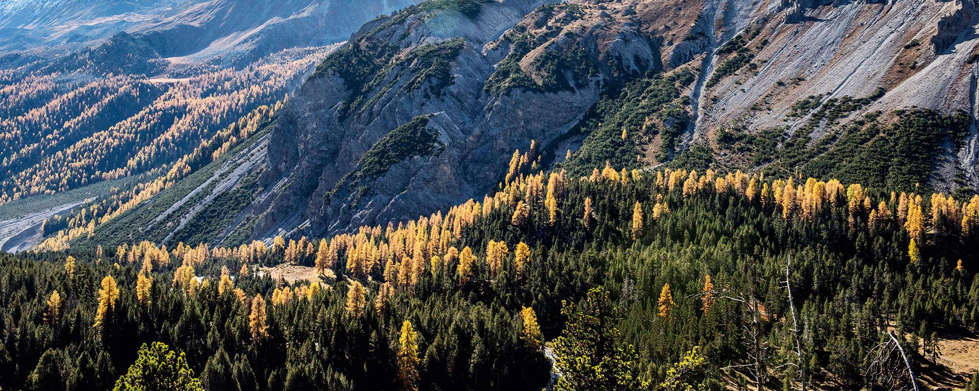 Arvenwald, Tamangur, Val S-charl
